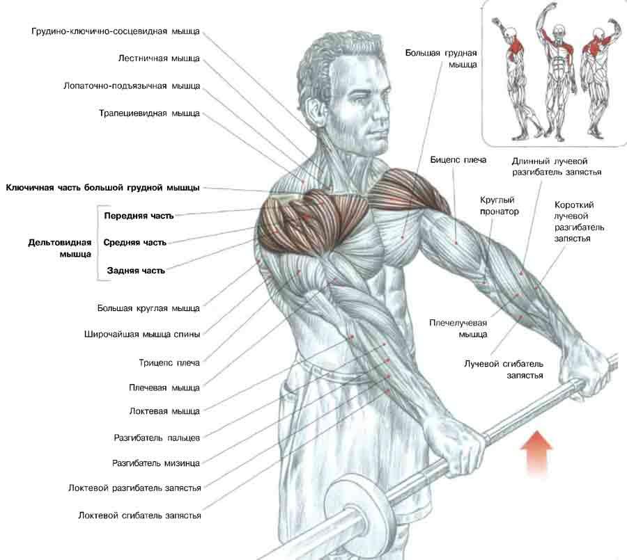 Упражнения для плеч для мужчин в домашних условиях